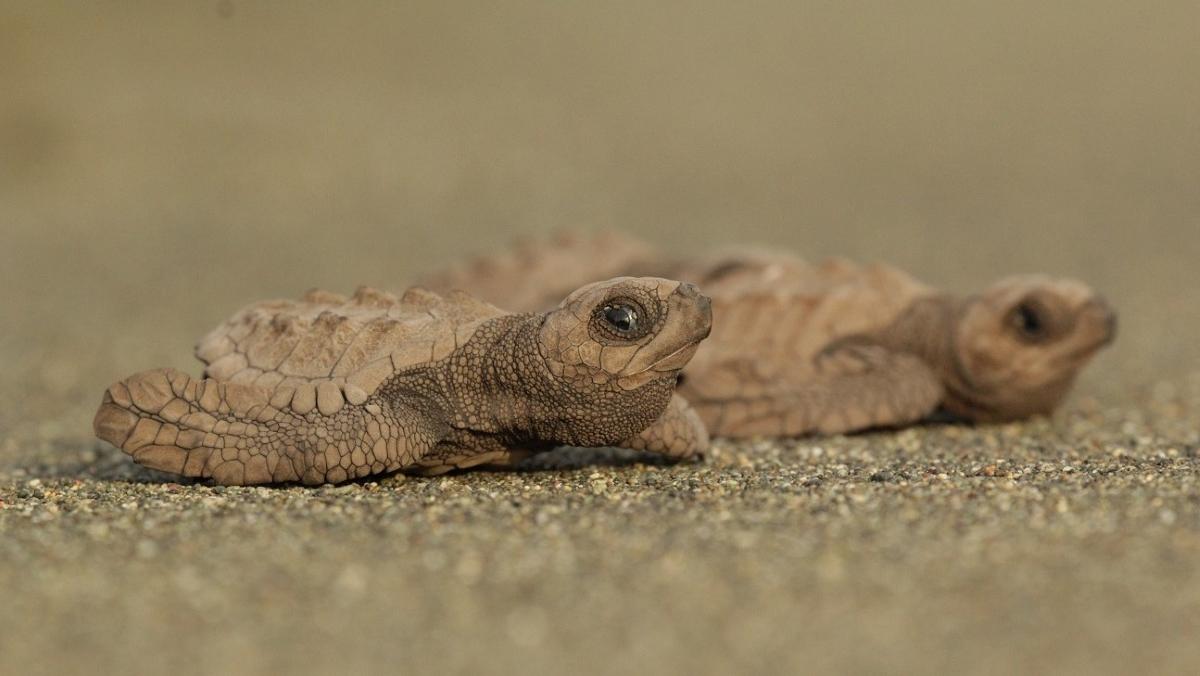 tortues-marines-tortugas-preciosas2